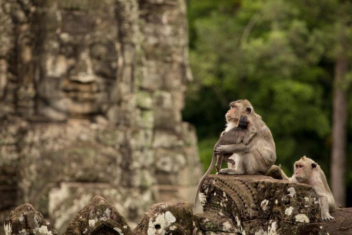 黎明期のカンボジアの株式投資は魅力的!?上場個別株の紹介と投資環境を紐解く!